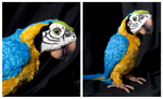 FurReal Friends - Squawkers McCaw Parrot by The-Toy-Chest