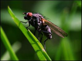 fly 2 by FrankBoe