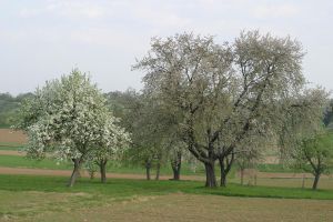 trees in Spring2 by archaeopteryx-stocks