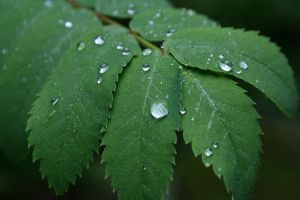 Raindrops of Green by Elenawen