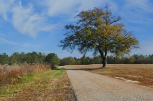 Country Lane Background Stock Photo  0457 Orig by annamae22