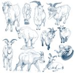 Goat Studies by cachava
