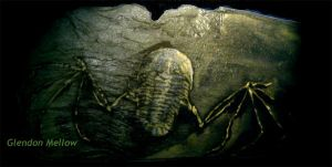 Flying Trilobite Fossil II by GlendonMellow