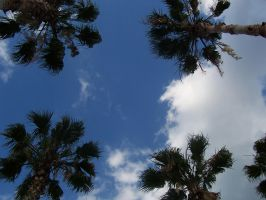 palm trees by INeedAPenName