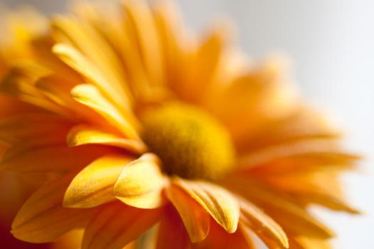 Warm flower 3 by clavito
