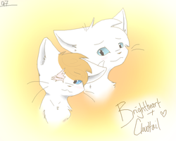 Brightheart and Cloudtail by Snow-Berries