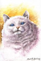 Jabba-The-cat by Betta-Fly