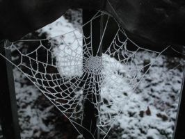 Spiders web in frost . by velar1