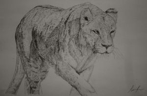 Lion sketch by sunwolf29