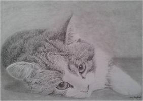 Kitten drawing by megh95