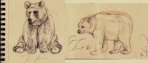 Bears sketches by TeaForBlues