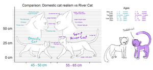 Realism cat vs River Cat comparison by WildShadowWarrior