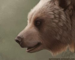 Bear by LaurenMagpie