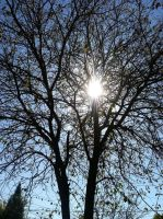 Sunshine through the trees by Photoartistic26