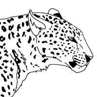 Leopard Lineart by Dancing-Taigan