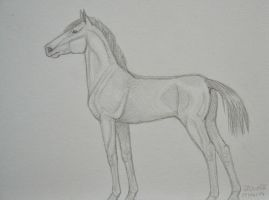 Yearling by Salvada