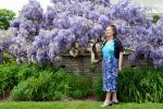 Mrs a* With This Year's Wisteria by aegiandyad