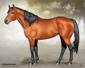 Quarter Horse for Morning Dust Ranch by Aomori