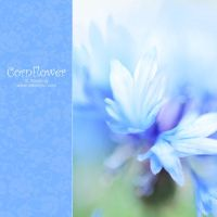 blue cornflower by AlexEdg