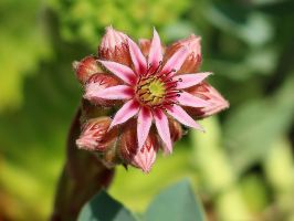 So Tiny in Reality... by AgiVega