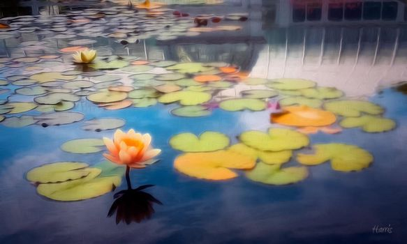 Lily Pads by DarthIggy