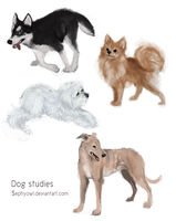 Dog studies by whistlebliss