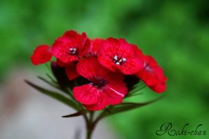 Red flower _02 by dEVILoFThegROTESQUE