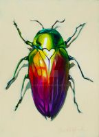 Love Bug by pastanaut