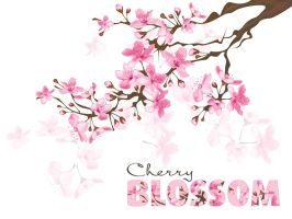 Day 22. Cherry blossom by lilvdzwan