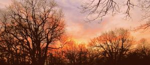 Winter Sunset over a Shrunken Lonely Forest by Beliar6