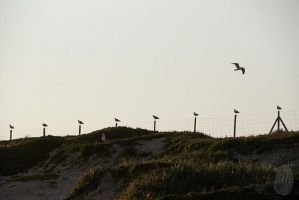 False Bay Gulls by AfricanObserver