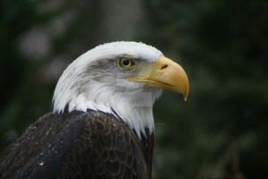 American Pride by cecphotography