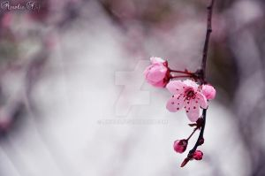 Late winter, early spring 5 by AkiCha