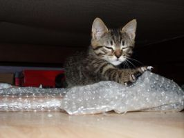 I love bubble wrap ! by Arayashikinoshaka