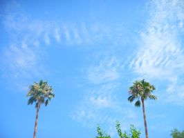 Palm trees and sky by Rcdevils