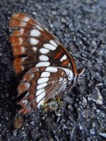 Lorquin's Admiral 2 by koshplappit