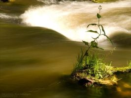 Oasis by rici66