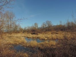 Vedder river north~1/26/2015~1 by Mathayis