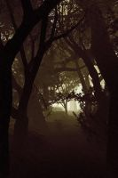 Forest Path - Dreamscape by FFworkshop