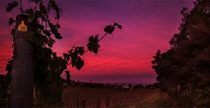 Vineyard Sunset by elkynz