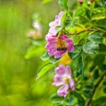 scattered colorful sweets. by PatiMakowska