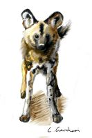 wild dog 2 by Tianithen