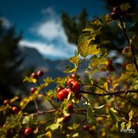 autumn s red by rdalpes