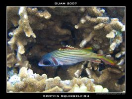 Guam 6 - Spotted Squirrelfish by Keith-Killer