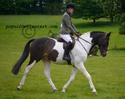 Warmblood_stock5 by popui