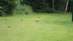 Bunnies on the grass by Dan-S-T