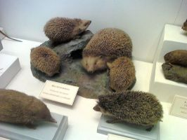 Family of hedgehogs by Lynus-the-Porcupine