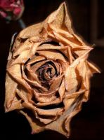 Dried out Yellow Rose by Rubyfire14-Stock