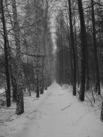 The Path6 by Lukotus