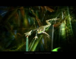 A frog's Crib by ValentinaKallias